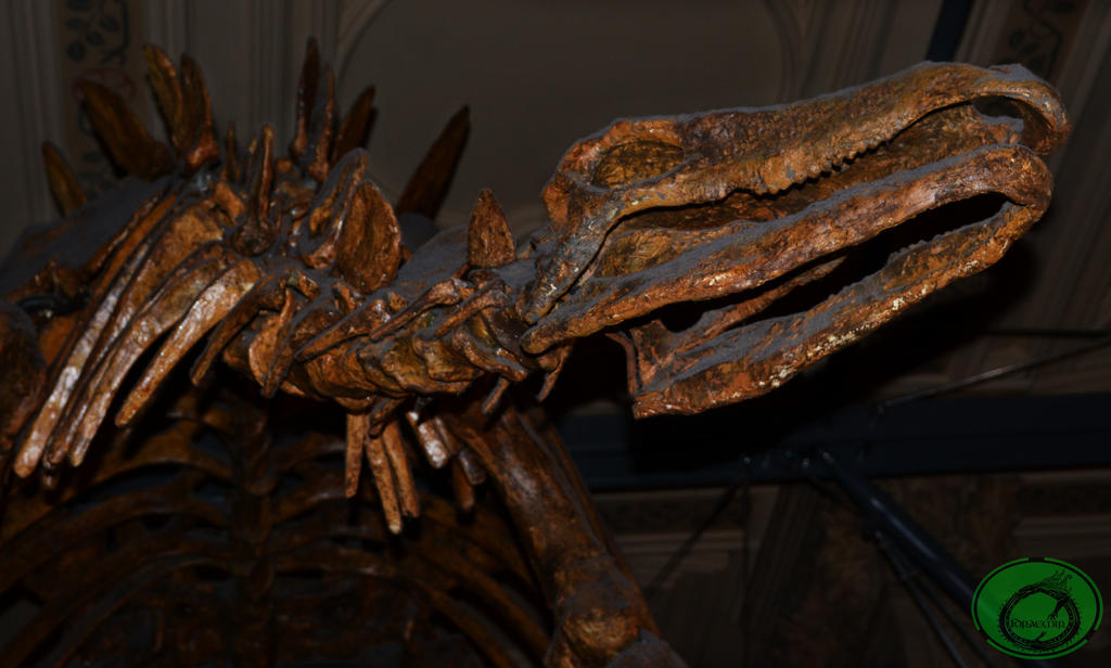 Stegosaurus 02 by Idraemir