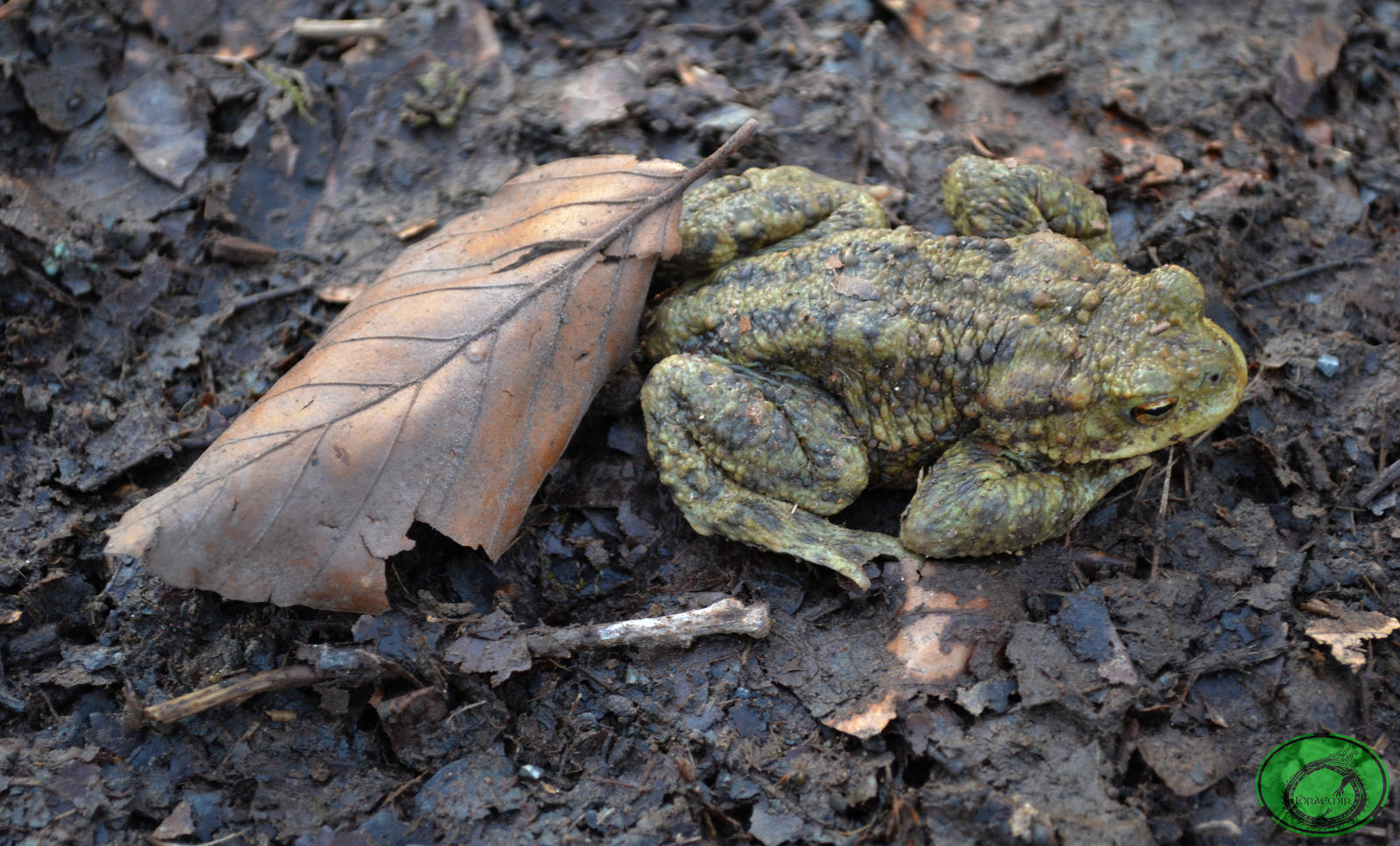 The Toad and the Leaf by Idraemir