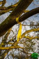 Rag Tree - Arbre a Loques 01 by Idraemir