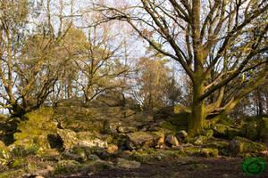 Rag Tree - Arbre  Loques 03 by Idraemir