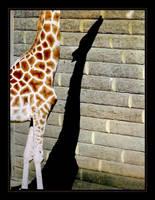 Giraffe by Crin