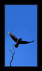 I am the Raven by Crin
