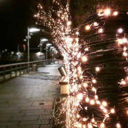 Twinkles of the Quay