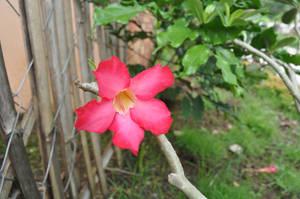 Flower flower by tinelijah