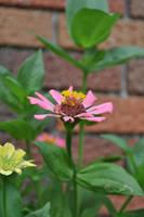 Pink Flower by tinelijah