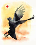 Pity for the Crow