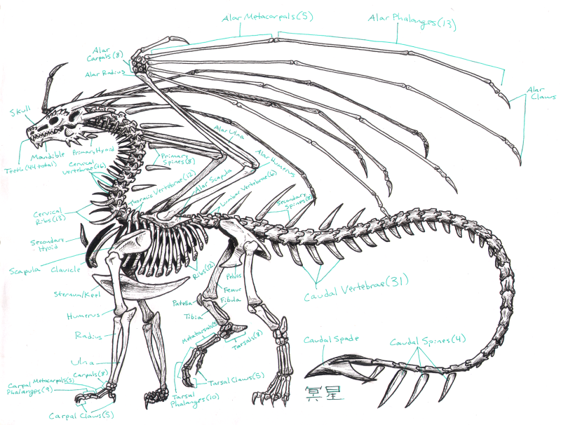 Zha Skeleton Anatomy by Zhantilniiraala on DeviantArt