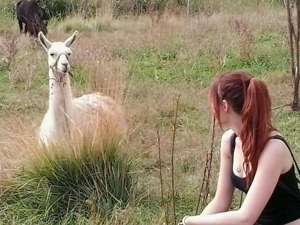 Llama :D by NekoCLaRish