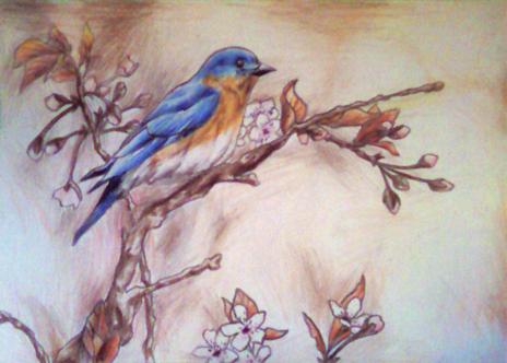 Bluebird by Vividiaaa