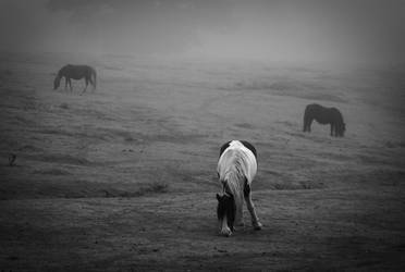 Horses in the mist by sharkbite1414