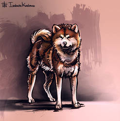 Akita by koel-art