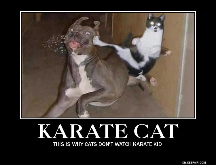 motivational poster:karate cat by demotivatonalman12