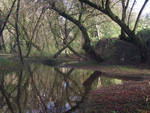 Mist on the Dordogne river 16