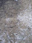 Snow texture 003