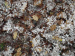 Snow and leaves texture 004