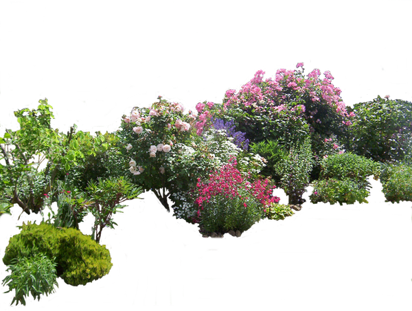 Flower Plant Png Flowered Garden Png 03 by