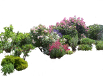 Flowered garden png 03