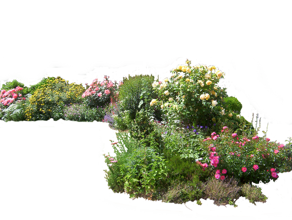Flower Plant Png Flowered Garden Png 02 by