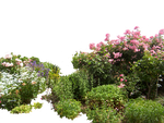 Flowered garden png 01