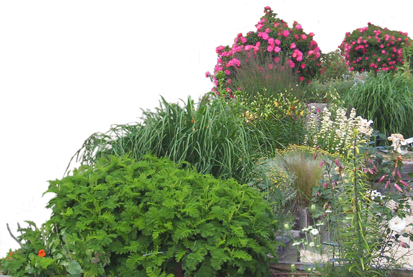 Flower Plant Png Flowered Garden Png 05 by