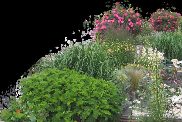 Flowered garden png 05 by HermitCrabStock
