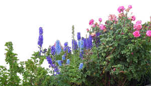 Flowered garden png 06 by HermitCrabStock