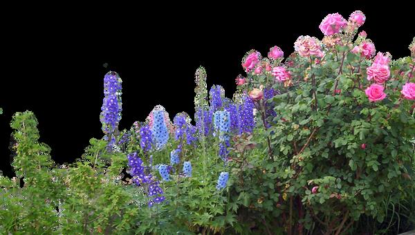 Flowered garden png 06