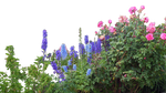Flowered garden png 06