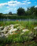 Wild flowers of summer 01 by HermitCrabStock