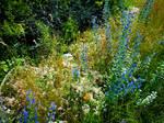 Wild flowers of summer 08