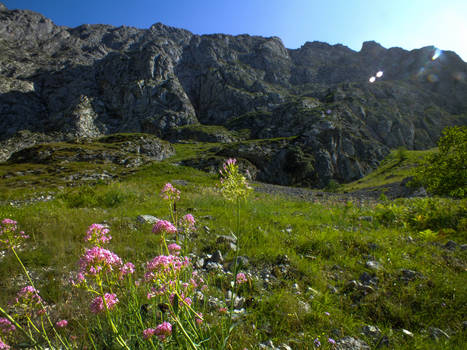 Picos de Europa 127 - Mountain and pink flowers