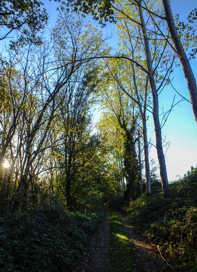 Fall landscape 2012.01 by HermitCrabStock