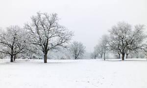Snowy landscape - 13/02