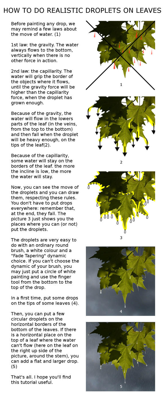 How to do Realistic Droplets on Leaves by HermitCrabStock