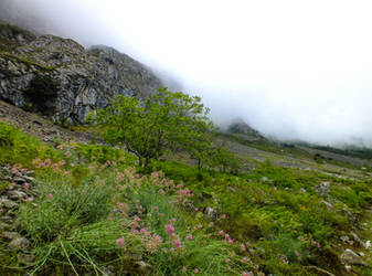 Asturias 2013 (23) Misty Mountains