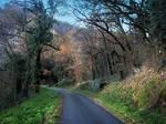 December 2013 - Woods 01 by HermitCrabStock
