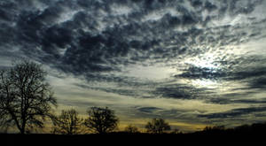 Sky and trees - 54A