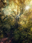 Forest Path - Premade BG 02