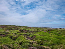Ouessant Island 08 - Heath by HermitCrabStock