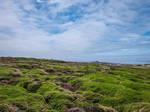 Ouessant Island 08 - Heath