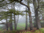 Brittany 30 - Forest in the Fog