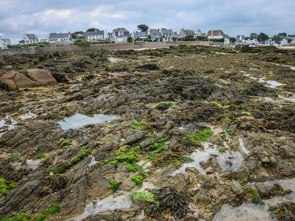 Brittany 50 - Rocky Beach Texture