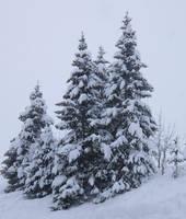 Avoriaz 014 - Snowy firs by HermitCrabStock