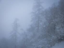 Chamonix Mt Blanc 066 - Snowy forest in the fog by HermitCrabStock