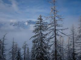Chamonix Mt Blanc 065 - Snowy forest by HermitCrabStock