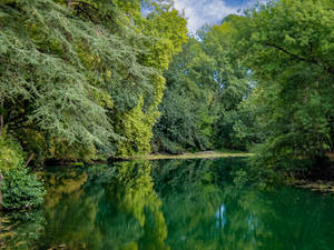 pond in the forest