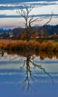 FALLen Leaves. by SYSPLUCK