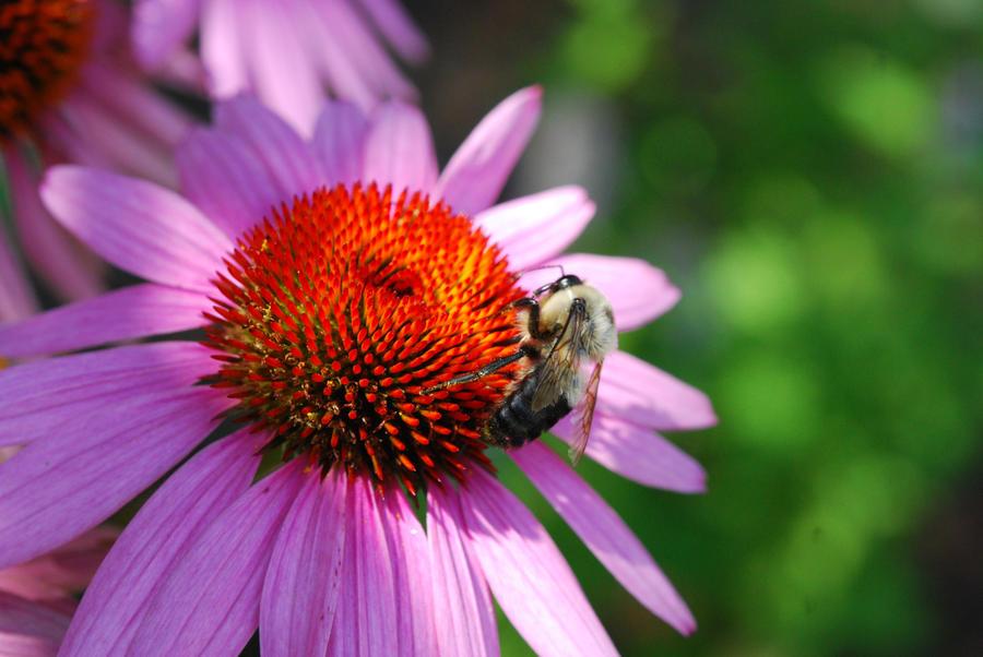 Pollination by RubyRadio