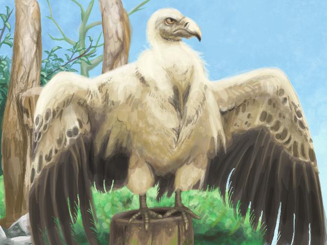 Muro Vulture by medli20