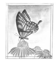 butterfly sk1